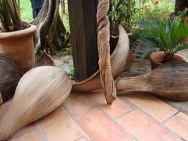 cosses de palmier naturels