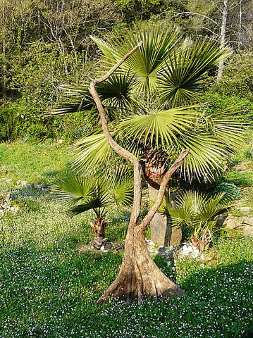 troncs naturels  pour montage arbres artificiels