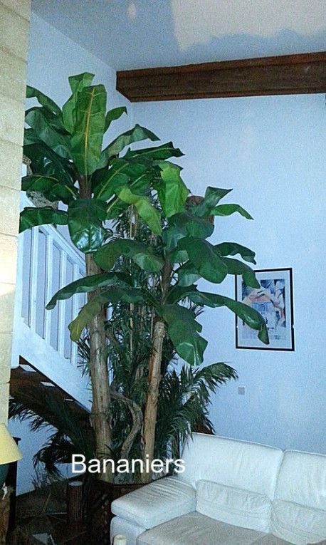 Composition de plantes avec bananiers, palmes stabilisées, bambous,