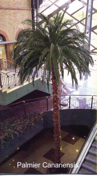 Palmier stabilisé palmes naturelles