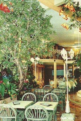 Plantes Ficus artificiel, tronc bois naturel